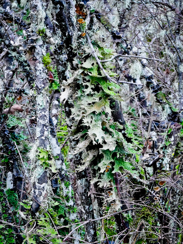 Lichens Colour
