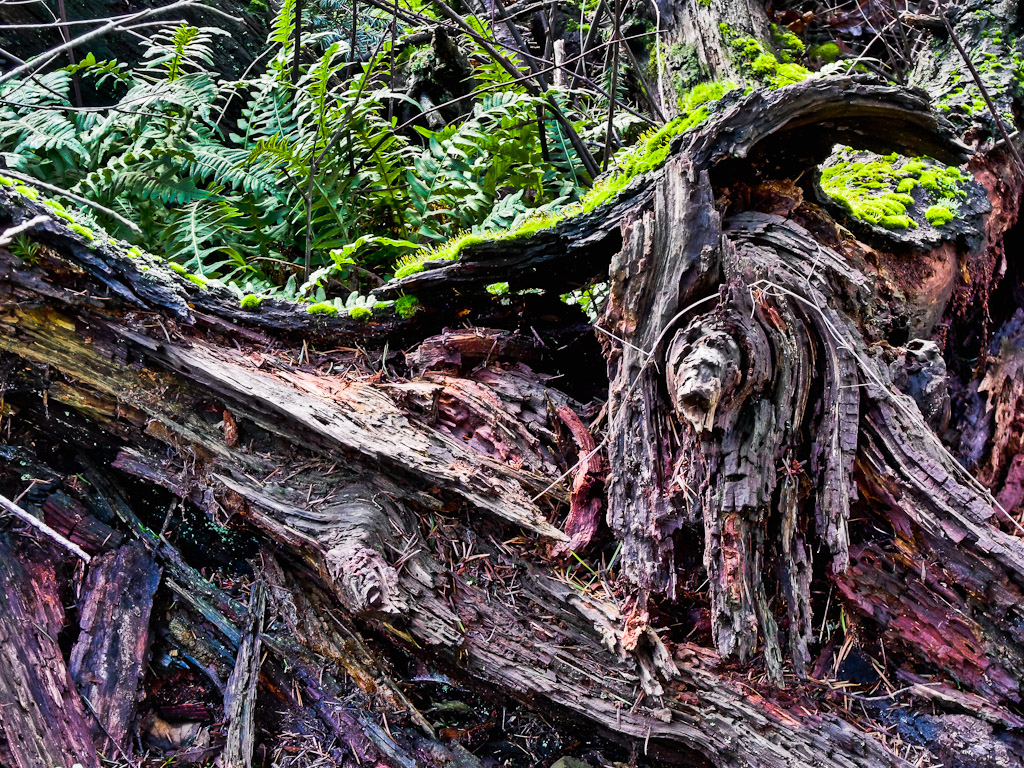 HDR Stump